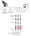 MicrofluidicsII.png