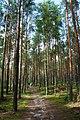 Mierzwice Kolonia las - panoramio.jpg