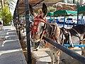 Mijas donkey.jpg