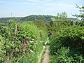 Mole Gap Trail - geograph.org.uk - 167787.jpg
