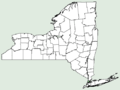Monarda media NY-dist-map.png