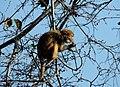 Monkey playing.jpg