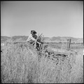 Monterey County, California. Rural youth. Mechanization, the agricultural employee. A local Salinas Valley youth... - NARA - 532177.tif