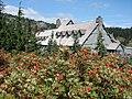 Mount Ash berries in mid August 2015. (9244c97117204ab4a36a351c5ab36af2).JPG