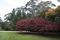 Mount Wilson NSW 2786, Australia - panoramio (79).jpg