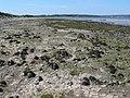 Mudflats, Morfa Aber - geograph.org.uk - 1340888.jpg