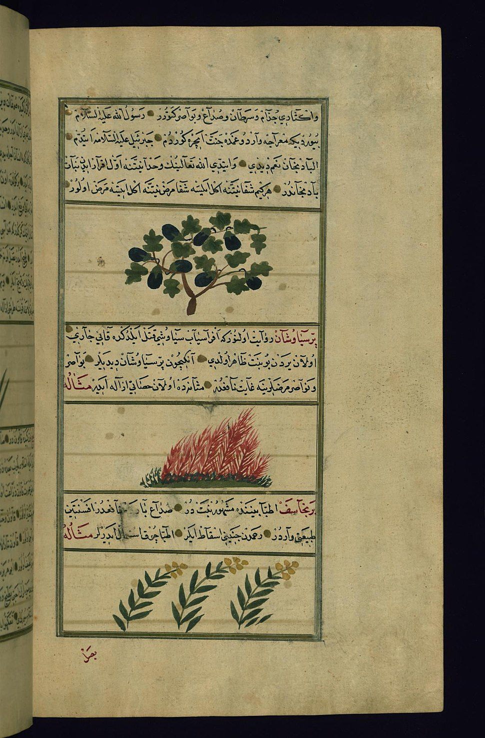 Muhammad ibn Muhammad Shakir Ruzmah-'i Nathani - An Eggplant, a Plant Called Parsiyavushan, and Dungwort - Walters W659225B - Full Page