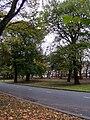 Muirhead Avenue 1.jpg