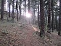 Mule Mountain Trail - panoramio (3).jpg