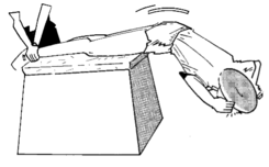 renforcement musculaire exercices exercices du tronc wikiversit. Black Bedroom Furniture Sets. Home Design Ideas