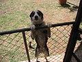 My Dog Skip.JPG