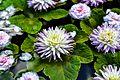 My Pond (14046398921).jpg