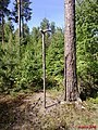 My walking rod...Happy Midsummer to all Panoramio friends - panoramio.jpg