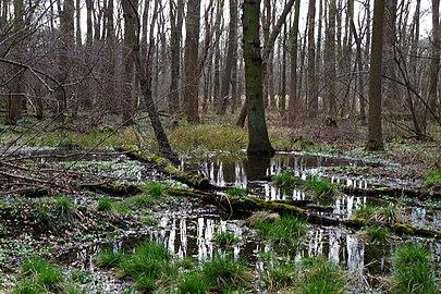 NSG HA 00053 Haseder Busch - Wald (3).jpg