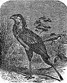 NSRW Secretary-Bird.jpg