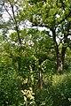 Naddniprianske Arboretum of Agriculture Institute of Southern Region 17 (YDS 2292).jpg