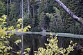Nationalpark Schwarzwald Wildsee-13.jpg