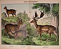 Natural history of the animal kingdom for the use of young people (Plate XXI) (5974373897).jpg