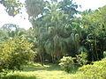 Nature1458.jpg