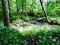 Naturschutzgebiet Unterer Berg.jpg