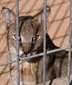 Negev Zoo Beersheva Israel IMG 0637a.JPG