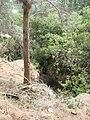 Nesher, Park Nesher, Wadi Katia 149.JPG