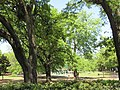 New Orleans - Audubon Park seen from Round Table Club building, 2016.jpg