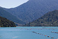 New Zealand Mussel farm-6371.jpg