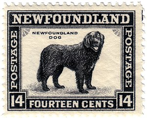 Newfoundland Dog Stamp Category:Newfoundland a...