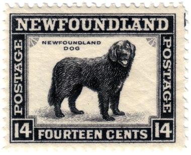 how to train a newfoundland dog