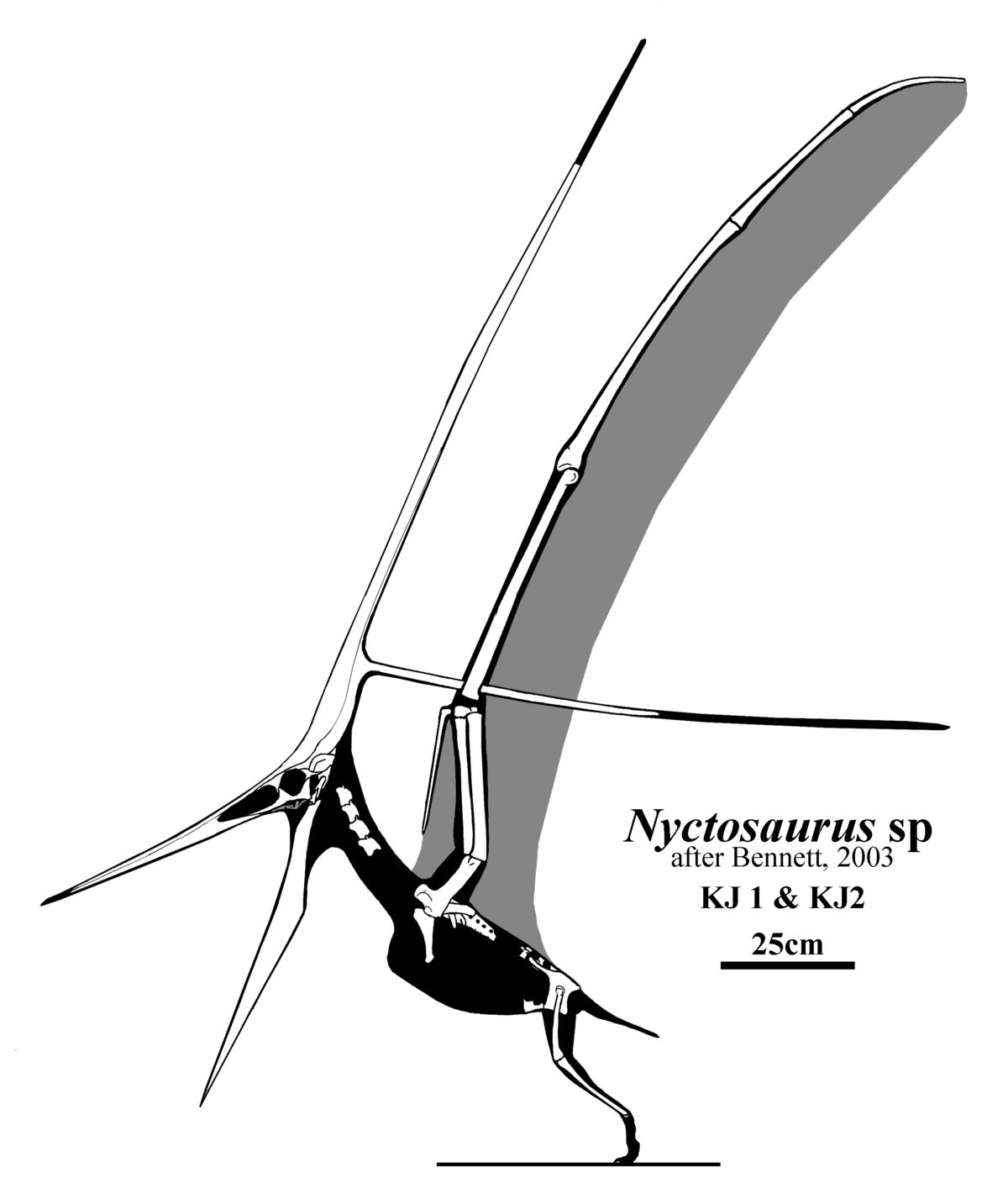 nyctosauridae wikipedia