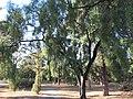 OIC glenside forest near hospital west.jpg