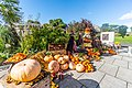 ONLY A FEW WEEKS TO HALLOWEEN PHOTOGRAPHED IN THE BOTANIC GARDENS IN DUBLIN-.jpg