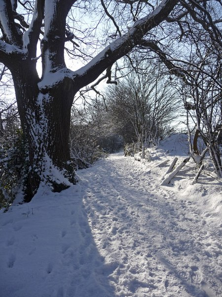 File:Oak tree, Trent Park, Enfield - geograph.org.uk - 1149923.jpg