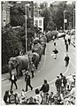 Olifanten van het American Circus lopen staart-in-slurf op de Raamsingel, hoek van Eedenstraat. NL-HlmNHA 54035087.JPG