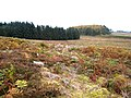 On Kirkwhelpington Common - geograph.org.uk - 594779.jpg