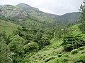 On The Way Munnar Hill Station - panoramio.jpg
