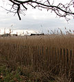 On the edge of Horsey Mere - geograph.org.uk - 1103374.jpg