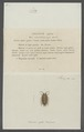 Oniscus agilis - - Print - Iconographia Zoologica - Special Collections University of Amsterdam - UBAINV0274 098 08 0013.tif