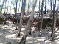 Ooty landscape 5.jpg