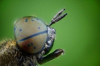 Detailný záber na hlavu hmyzu