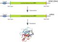 Origin of bacterial genes from split genes.png