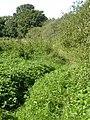 Overgrown Path - geograph.org.uk - 44564.jpg