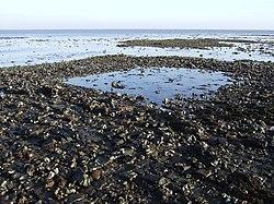 Overzicht van ondergelopen strand, met zicht op de vermoedelijke fundering van de kerktoren van het verdronken Middeleeuws dorp Nieuwlande--Archeoregio 15, AMK-terrein 49C-001 - Krabbendijke - 20425860 - RCE.jpg