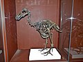 Owens Dodo skeleton.jpg