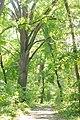 Pădurea Domnească EGO 5856.jpg