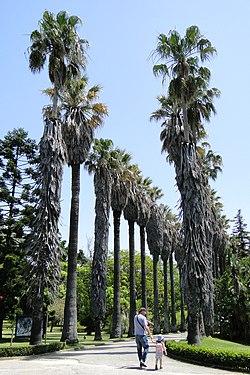 Jardim Botanico Tropical Wikipedia A Enciclopedia Livre