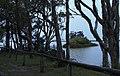 Paperbark parade - panoramio.jpg