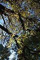 Parc Montsouris @ Paris (29860595540).jpg