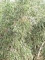 Park HaAmakim 11.jpg